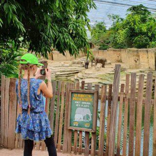 Gisteren mocht ik met @ivnnatuureducatie mee naar @wildlandsnl! We kregen een rondleiding achter de schermen en de olifantenverzorgster vertelde superveel over de dieren en hoe ze verzorgd worden. We hadden echt een heel leuke, leerzame dag! Ik heb wel 300 foto's en filmpjes gemaakt! Het mooist vond ik de vlinders, het grappigst waren de bavianen en het liefst nam ik alle prairiehondjes mee naar huis, die zijn zo cute! Wat is het toch een feest om #kinderdirecteur te zijn 🥳😻💖 #ivnnatuureducatie #wildlandsemmen #zadigetvoltairekids